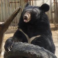 Мишки в Большереченском зоопарке вышли из спячки