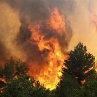 В Омской области 17-летний подросток развёл костёр и спалил лес