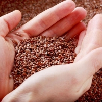 На агровыставке в Омске показали новые семена льна, дающие пищевое масло