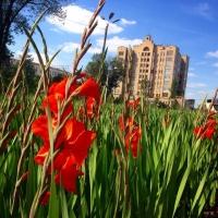 К выходным в Омске обещают жару с грозами и градом