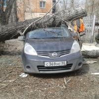 Омич выставил на продажу автомобиль с деревом на крыше