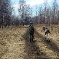 Омские охотинспекторы выкормили лосенка, который мог погибнуть