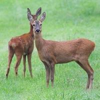 Животные Омской области продолжают гибнуть от рук браконьеров
