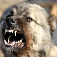 В Омске собака покусала девочку на уроке физкультуры