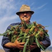 В Омске увеличат количество торговых точек для продажи овощей