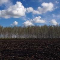 Омским аграриям в этом году придется сеять днями и ночами