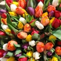 В Омске инспекторы ДПС дарили автолюбительницам тюльпаны
