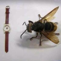 В Омске самые маленькие в мире часы теперь показывают зимнее время