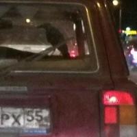 Зима близко: в соцсетях обсуждают старика с вороном, ездящего по улицам Омска