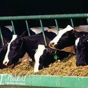 В Омской области осудили банду, похитившую 169 коров