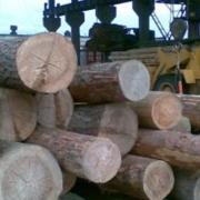 Инвесторов позовут в лес