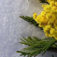 В Омске ожидается холодный Женский день