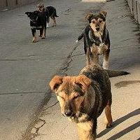 Омские депутаты предлагают усилить меры по отлову бездомных животных