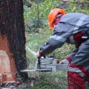 Омичи купили 780 тыс. кубометров древесины по льготным ценам