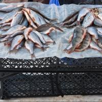 В центре Омска нашли 80 кг нелегальных продуктов