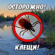 В Омской области отмечается подъем активности клещей