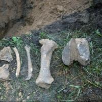 В Омске во время замены водопровода обнаружены кости мамонта