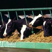 Аграриям добавят на корма
