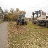 В спиливании яблонь на Красном Пути в Омске обвинили агронома