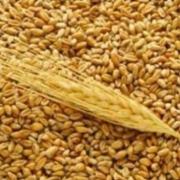 В Русско-Полянском районе комбайнеры украли 9 тонн зерна