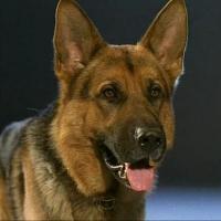 Служебная собака Тайга задержала похитителя спиртного в Омской области
