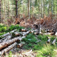 На контроле у МВД России находится дело о незаконной вырубке леса в Омской области