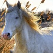 Омские пограничники задержали лошадей-нелегалов