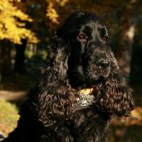 У Омского Городового появится собака Узли