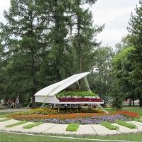 Более 200 тысяч цветов высадили на территории предстоящей «Флоры» в Омске