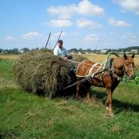 Омичи украли тонну сена с поля села Желанное
