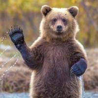 Омским охотникам увеличили квоту на отстрел медведей и барсуков