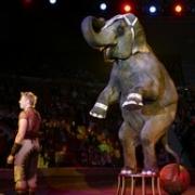 Цирковые слоны едва не сгорели по пути в Омск
