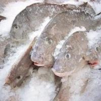 В Омской области уничтожили партию рыбы без документов