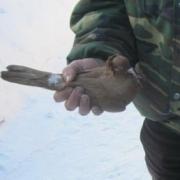 В Омской области улетело в небо 30 тысяч рублей