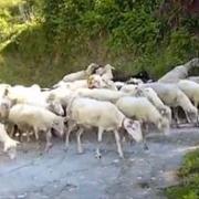 Омские полицейские избили человека, потерявшего своих овец