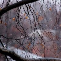В сентябре омичей ждут дожди, мокрый снег и прохлада