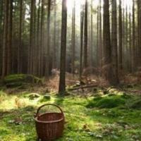 В Омской области ищут пенсионерку, заблудившуюся в лесу