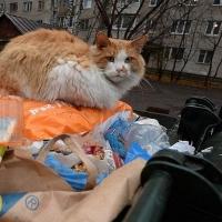 В Омской области не расторгают контракт с регоператором по обращению с ТБО