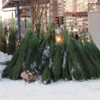 В Омске поймали незаконных торговцев новогодними елями