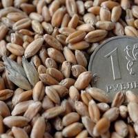 Падение рубля может отразиться на цене омской пшеницы