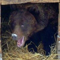 Чуткие медведи проснулись в недоумение от омской погоды
