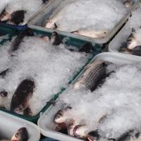 В Омск не попали еще 57,7 тонны рыбы из Петербурга