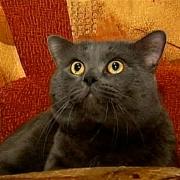 Кот, потерявшийся в Омске, прошёл до дома 700 километров