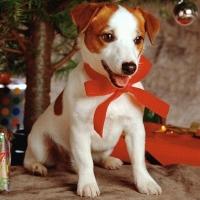 Кинологи попросили омичей не дарить щенков на год Собаки
