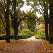 Дендропарк встретил омичей осенним пейзажем