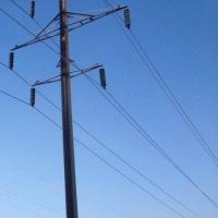 В омском регионе незаконно вырубили 119 деревьев ради электричества для шашлычной