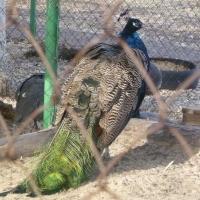 Бурков планирует выделить деньги на ремонт Большереченского зоопарка