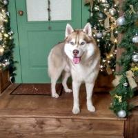 В Омске жертвой догхантеров стал пес, лечивший детей