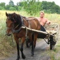 В Омской области у селянина украли деталь от конной телеги