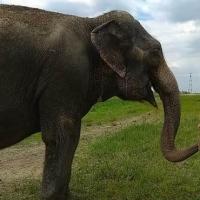 Под Омском в Иртыше искупались слоны